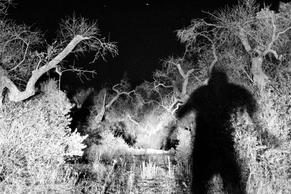 A night-time inspection of abandoned fields in Spongano. Farmers are waiting for government funding for a strategy to replant new, resistant olive trees or for a change of destination for the field, which has so far not been allowed.